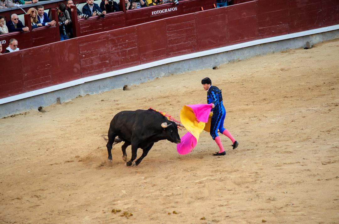 Corrida – barbarzyństwo w Hiszpanii