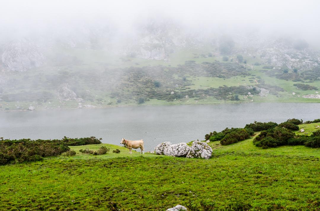 Picos de Europa - zielona strona Hiszpanii (32)