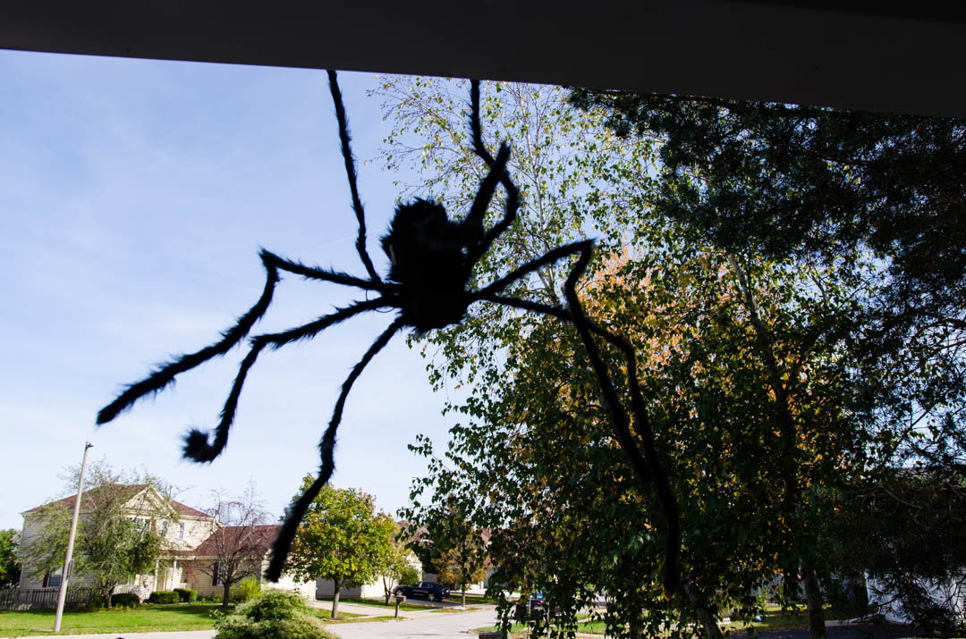 Cukierek czy psikus hallowen w usa (54)