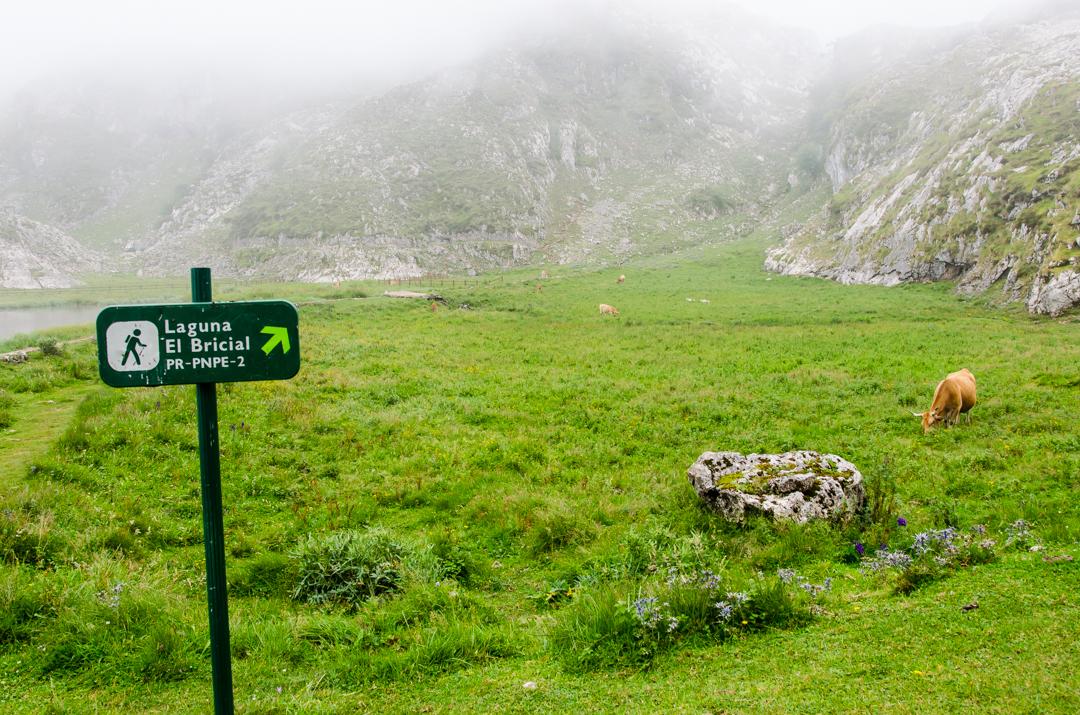 Picos de Europa - zielona strona Hiszpanii (2)