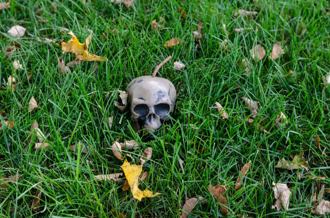 Cukierek czy psikus hallowen w usa (48)