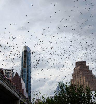 Austin, czyli kowbojki, nietoperze i katedra ze śmieci - stolica Teksasu