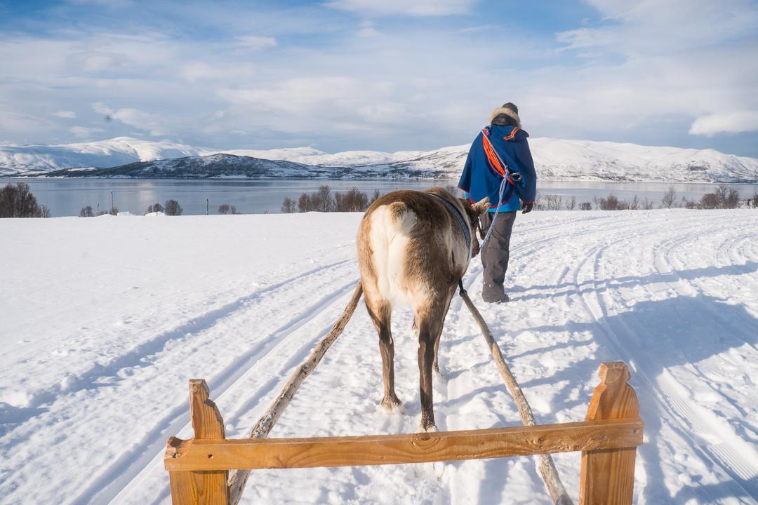 Wizyta u Saamów i zaprzęg reniferowy na północy Norwegii